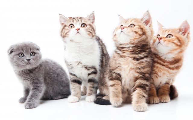 猫全般の写真