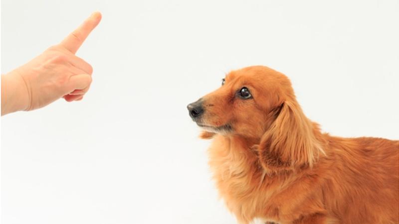 言うことを聞く犬の写真