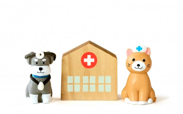 動物病院のイメージ写真