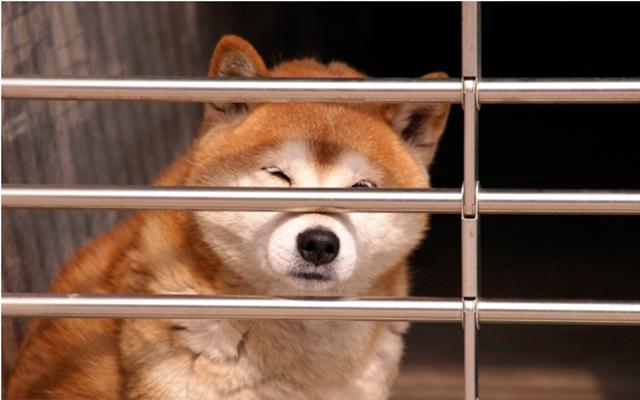 ゲージに入った犬の写真