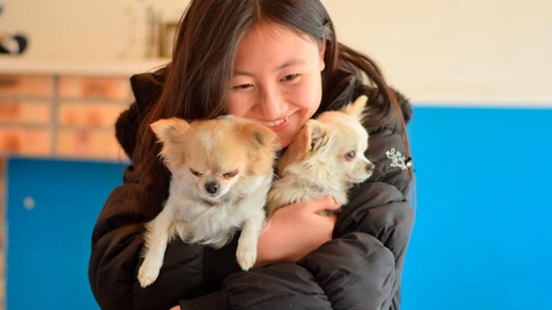 愛犬家の写真