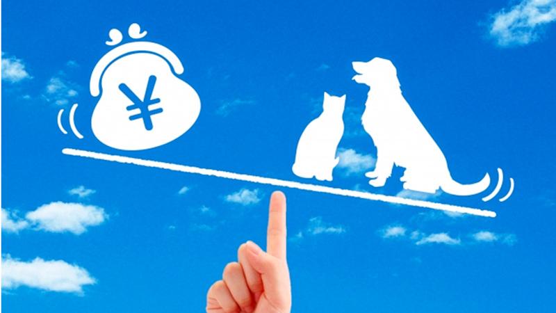 ペット保険の写真
