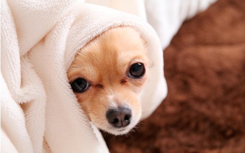 布を被った犬の写真