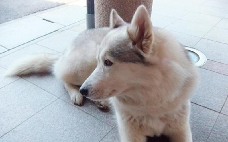 大型犬の写真