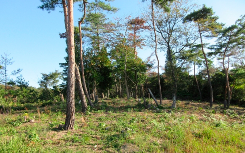 公園の木の写真