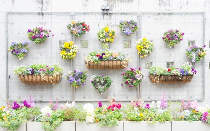 プランターに植えた花の写真