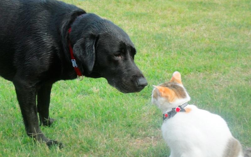 猫と犬の写真