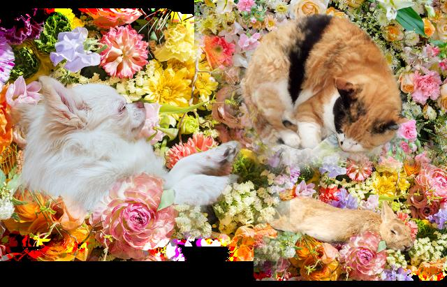 ペット葬儀の写真