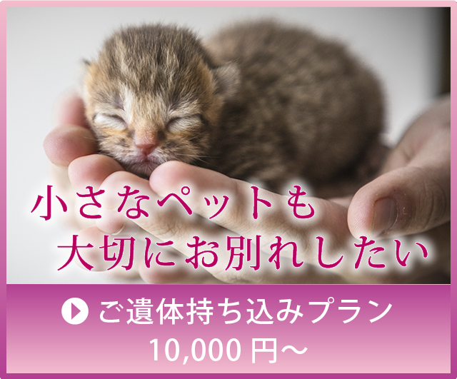 小さなペットに。持ち込みプラン1万円